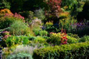 Stauden als perfekte Mischung für jeden Garten