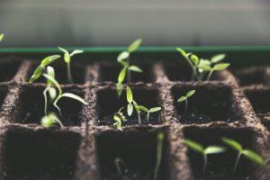 Entfernen Sie Plastik aus Ihrem Garten für bessere Pflanzen