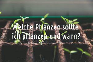 Welche Pflanzen sollte ich pflanzen und wann?