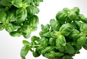 Wie man Basilikum anbaut - Tipps und Pflege